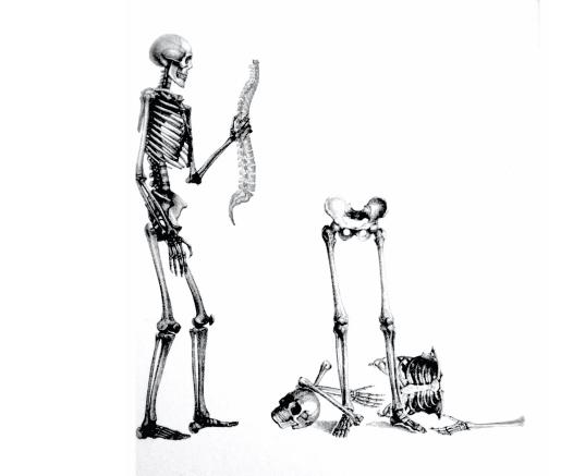squelette techniques ostéopathie